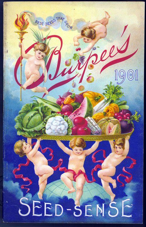 vintage seed package