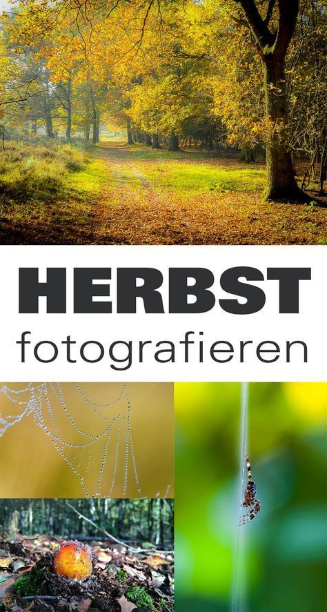 Buntes Laub, Pilze, schöne Lichtstimmungen - Inspiration & Tipps für gelungene Herbstfotos