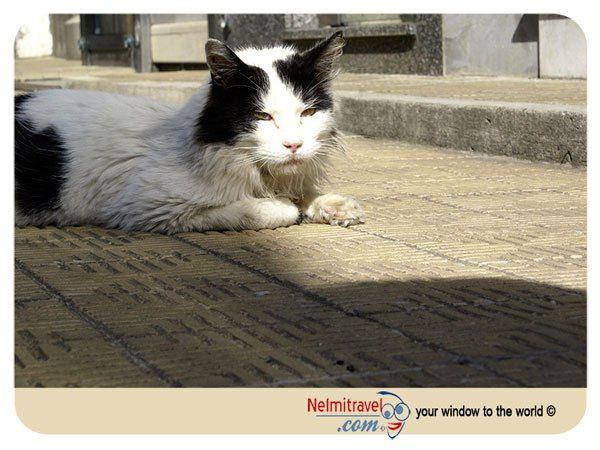 The Guardians of La Recoleta.  http://nelmitravel.com/recoleta-cemetery-cats/