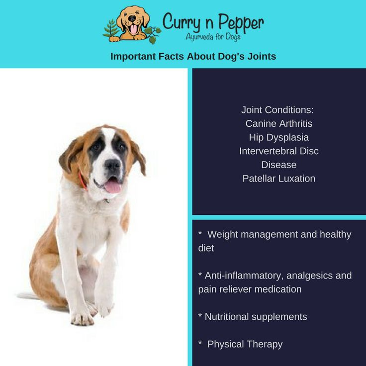Here is an interesting fact about dogs and joint problems.  Some breeds are more prone for joint disease than that of others.  For example Newfoundlands have the highest prevalence of cruciate ligament disease of all breeds.  Web MD shares a great article about joint problems and what causes them.    #currynpepper #ayurveda #philosophy #science #life #longevity #power #cycles #nature #elements #dog #dogsofinsta #dogstagram #dogsofinstagram #vegan