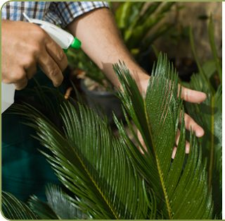 Cómo hacer 10 Fungicidas y pesticidas naturales y caseros para el jardín.