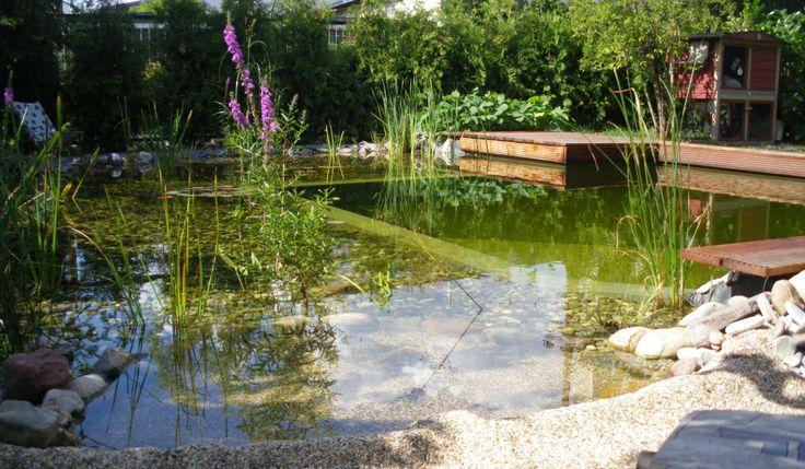 Schwimmteich in Berlin - Mielke's Schwimmteiche - Spezialist für Zier-, Natur- und Badeteiche