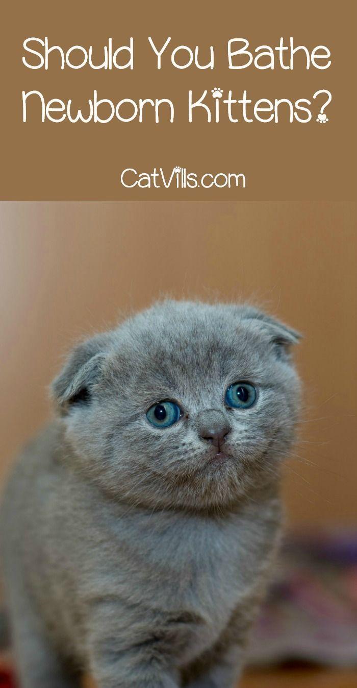 Bathing Newborn Kittens Is It A Good Idea Catvills Newborn Kittens Cat Having Kittens Baby Kittens