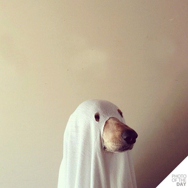 Wooo! by Theron Humphrey, Instagram, Photo of the Day. Thanks to @Tiger de Wire! #webstagram #thiswildidea #Theron_Humphrey #Ghost_Dog