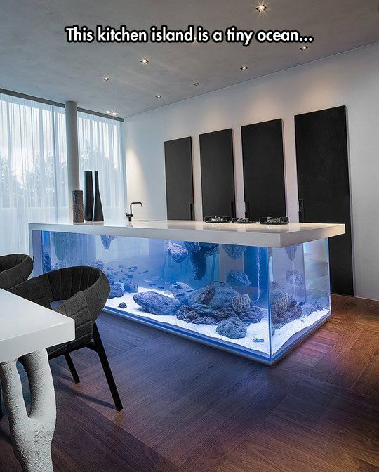 An Aquarium In The Kitchen I want I want I want!!!