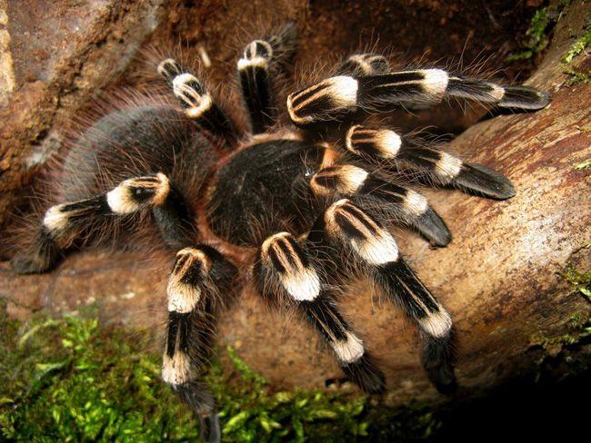 25 Photographs of Dangerous Spider - http://photographyheat.com/25-photographs-of-dangerous-spider/ http://photographyheat.com/wp-content/uploads/2013/02/Spiders-15.jpg