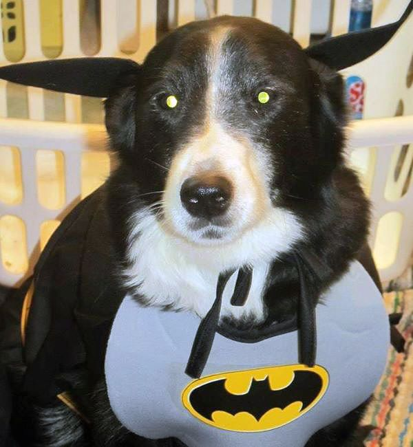 This is Valerie's BatDog Pepper