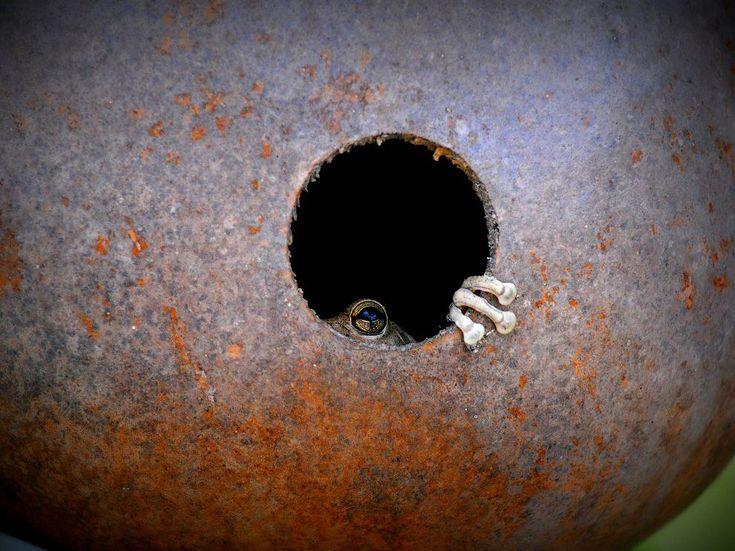 Frog Dwelling
