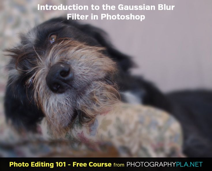 Introduction to the Gaussian Blur Filter in Photoshop