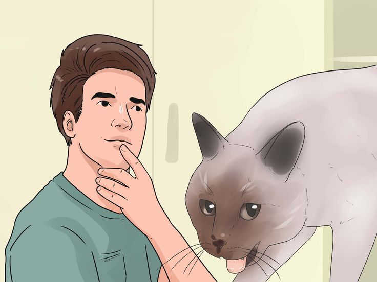 The majority of cats are by nature relaxed and peaceful creatures. They don't want to bite or scratch and will usually go to great lengths to avoid a situation where this is necessary. However, there are times when a pet cat does strike...