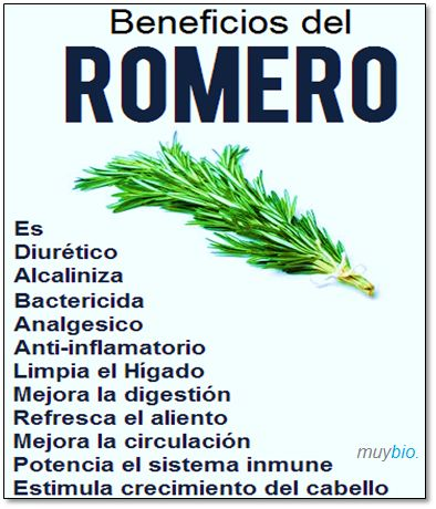 Beneficios de romero