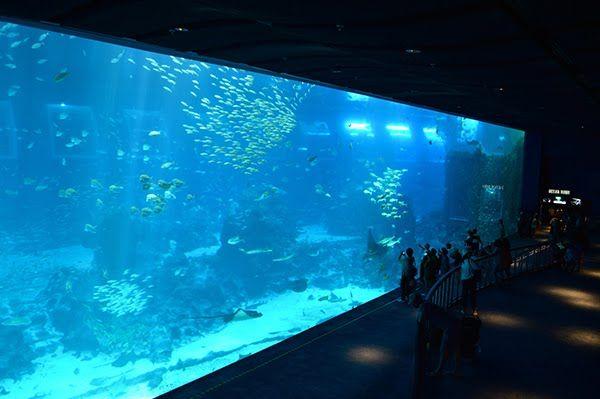 S.E.A Aquarium - Open Ocean