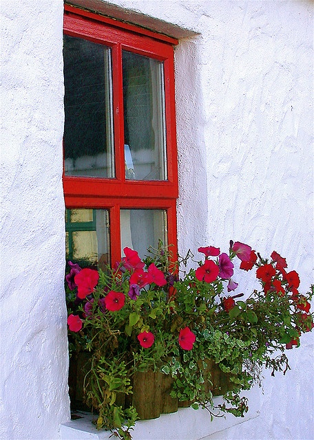 i love window boxes!!! Bebe'!!! Love the red flowers with the red painted window!!!