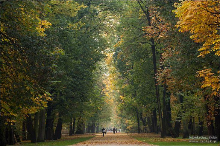 Jesień w parku, rozmawiajacy ludzie