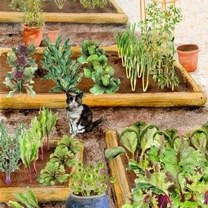 the best selling small vegetable garden is the perfect way to start your grow your own