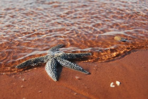East Island Star by gtharris
