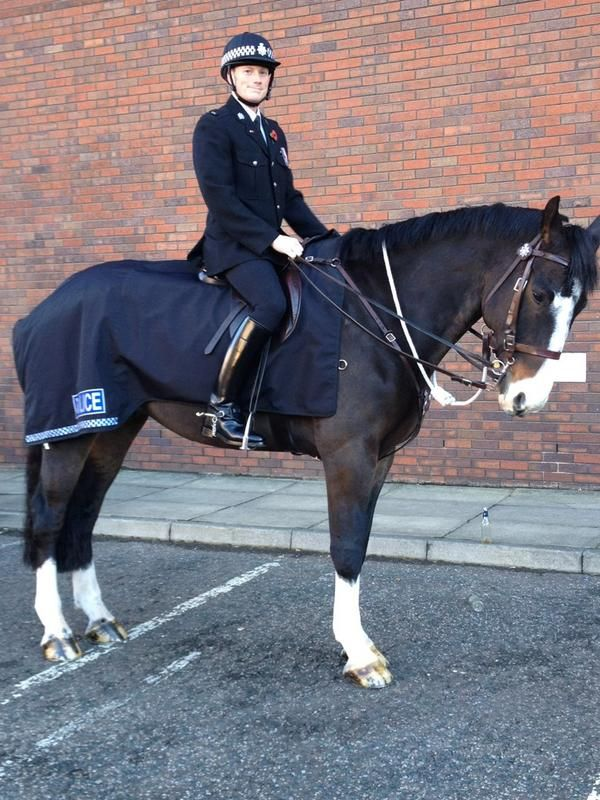 Police horse bud and PC Hirst ready for the parade in Leeds