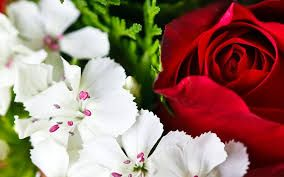 Image result for photo of red and white flowers