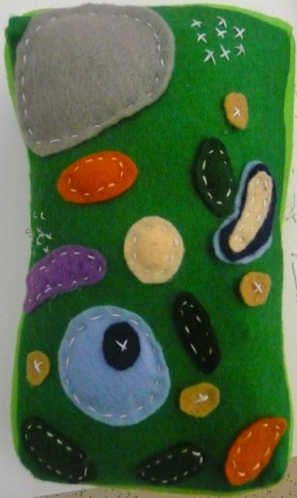 Plant cell diagram and animal cell diagram | Find image