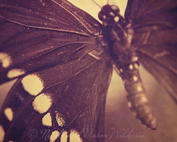 Sepia butterfly by Giant Peach Designs.