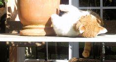 FAQ sobre los gatos callejeros
