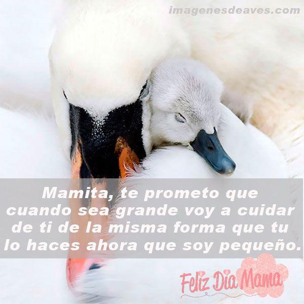 Imagenes+De+Aves+Con+Frases+Bonitas+Para+El+Dia+De+La+Madre