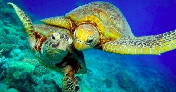 Avaaz - Aux dirigeants du monde entier: protégez 30% de nos océans!