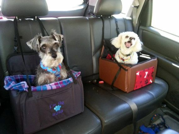 Dog Car Booster Seat. The one white doggy looks like he played a joke on the other one. ________And the Schnauzer doesn't think that Poodle is vey funny, either! Ha. ~lg