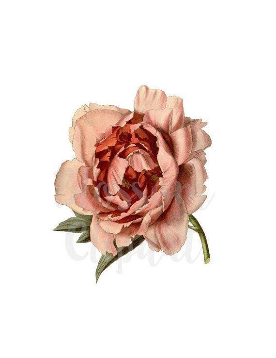 Rose Clipart Flower Vintage Rose Png Clip Art Floral Png Etsy Rose Clipart Clip Art Vintage Flower Illustration