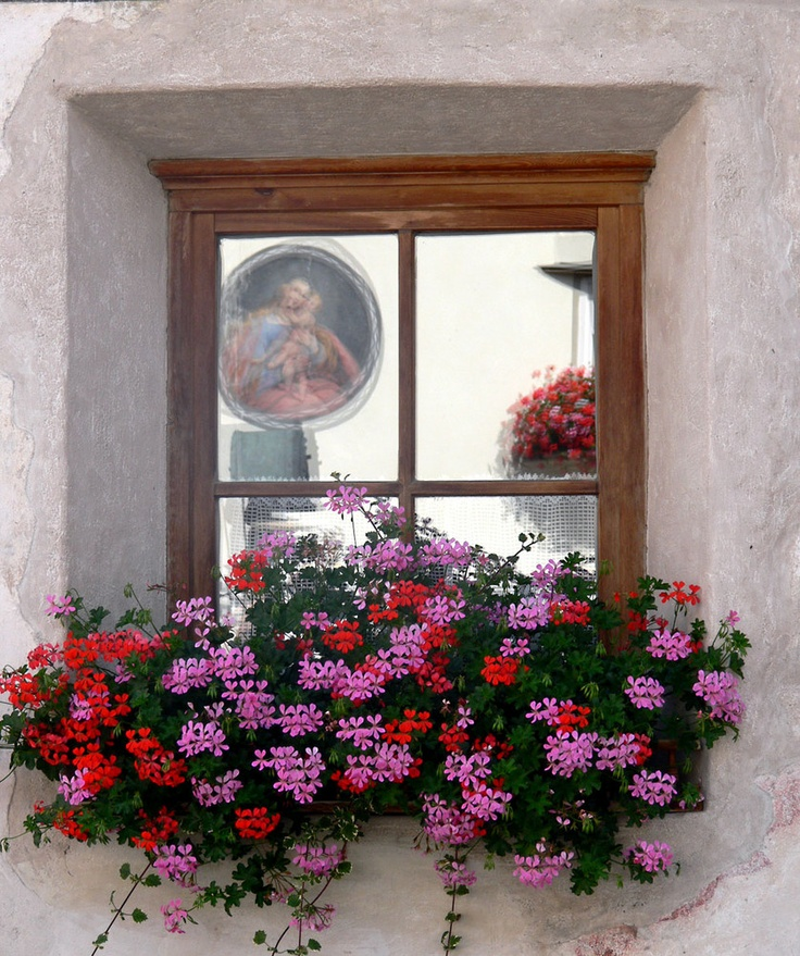 Thinking pink and red geraniums for the front window...