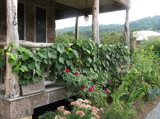 And just in case you thought grapes need to be relegated to garden or vineyard, get a gander of blogger Nan K. Chase's grape-y, gorgeous  porch. From MOTHER EARTH NEWS magazine.