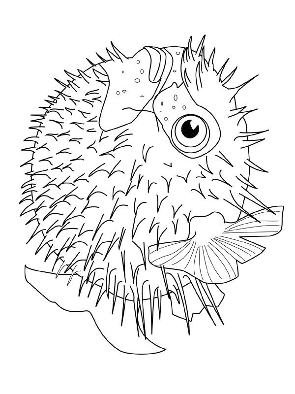 Coloring Book Pages Of Fish : 186 best fish sealife dolphin coloring for adults art pages images