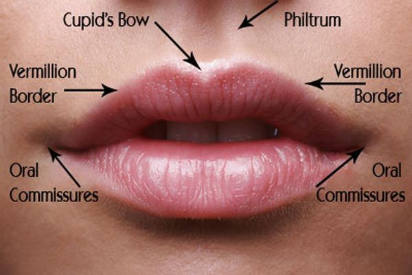 Things to know about Lip enhancement