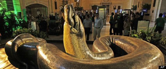 full-scale model of an ancient snake so large it could swallow a crocodile whole.'Titanoboa' lived in what is now South America around 58-60m years ago, was 42 feet long and weighed more than a ton.
