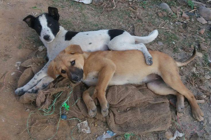 Pupy love