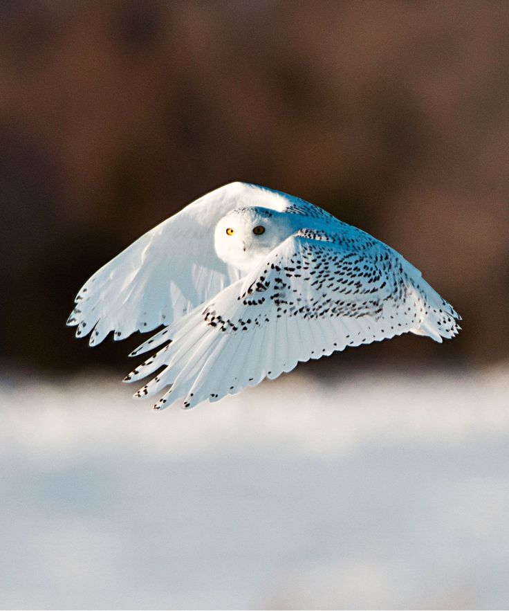 Traffic Camera Snowy Owl Photo Canada   On Thursday, Quebec transport minister Robert Poeti tweeted photos of a snowy owl — that were taken by a highway traffic camera. #refinery29 http://www.refinery29.com/2016/01/100809/traffic-camera-photo-snowy-owl-canada
