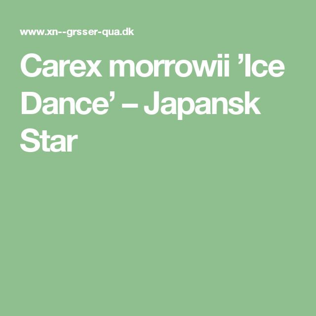 Carex morrowii 'Ice Dance' – Japansk Star