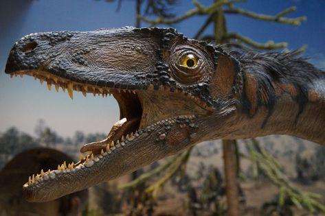 #animal #blur #close up #creepy #dangerous #daylight #dinosaur #exhibit #eye #head #hunter #museum #natural history museum #portrait #predator #replica #reptile #side view #teeth #tree #wild #wildlife #wood