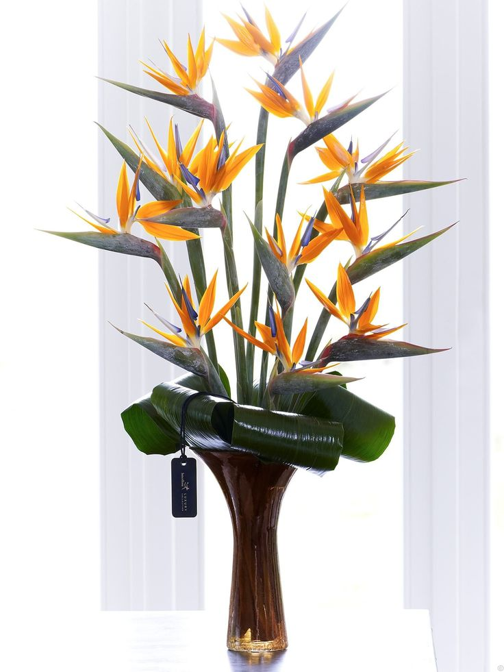 Strelitzia Bird of Paradise  Bold Flowers  Luxury