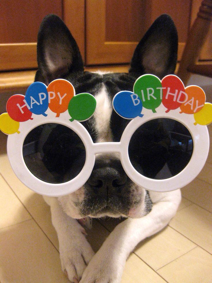 Картинка с днем рождения с собакой в очках