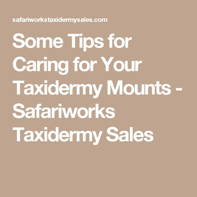 Some Tips for Caring for Your Taxidermy Mounts - Safariworks Taxidermy Sales