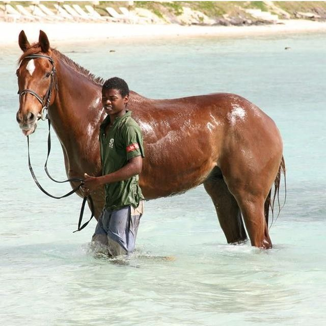 Chicks LOVE #Mauritius and #horseriding! #horse #sand #achickinMauritius #chicksandtripsontheroad #island #sea