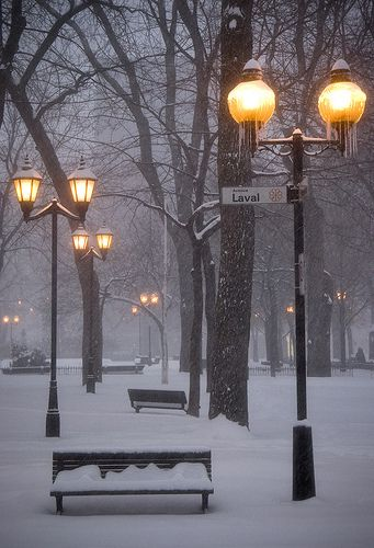 Montreal Winter - St. Louis Square, Le Plateau