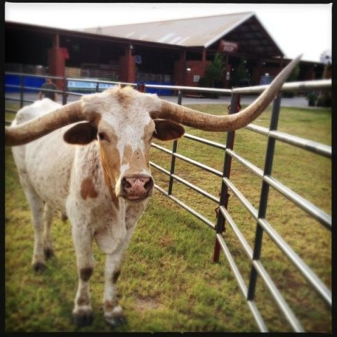 Now, this is Texas! Photo by our very own @Barbara Acosta Acosta Ovrutsky in Austin. #clfair