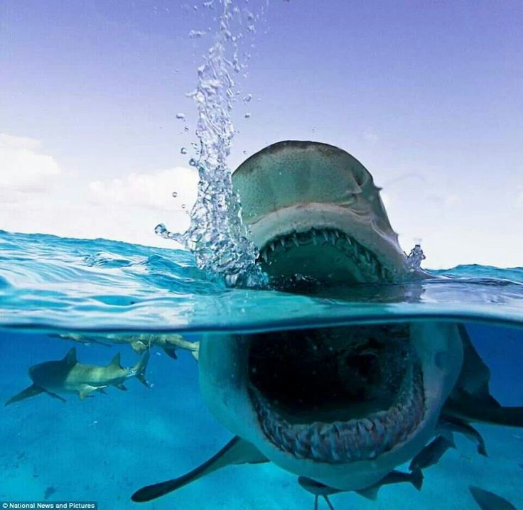 43 Best Shark Quotes Images On Pinterest
