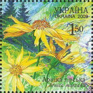 Mountain Arnica (Arnica montana)