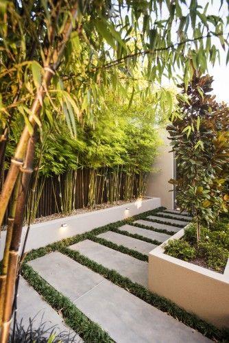 The 25+ best Bamboo landscape ideas on Pinterest Bamboo - bambus garten design
