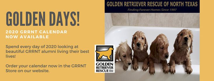 Golden Retriever Puppies Dallas Fort Worth References