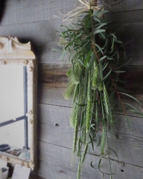 小麦のスワッグ wheat,eucalyptus,phylica.