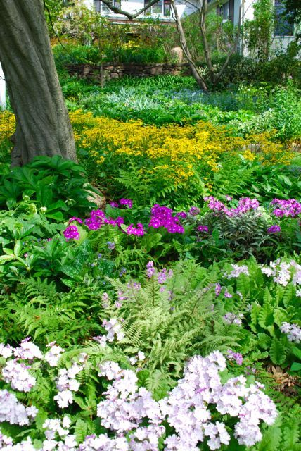 17 Best images about Dry shade garden ideas on Pinterest